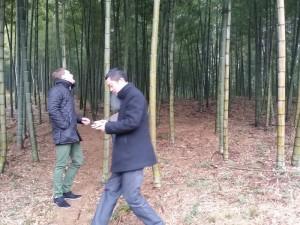 Auswahl des Bambus-Rohstoffes