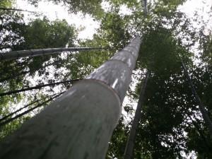 Bambus für Produktion groß