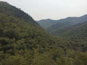 Bambuswälder für Produktion