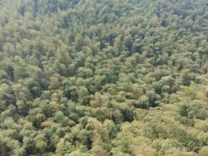 Bambuswälder von oben